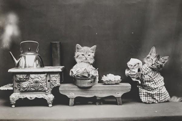 Фрис пытался фотографировать также кроликов и щенков, но впоследствии сказал, что кошки были его любимыми.