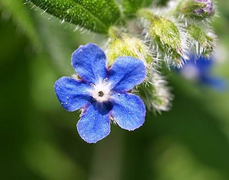 Fotos De Flores Silvestres Y Sus Nombres - Fotos de plantas silvestres para conocer sus nombres científicos