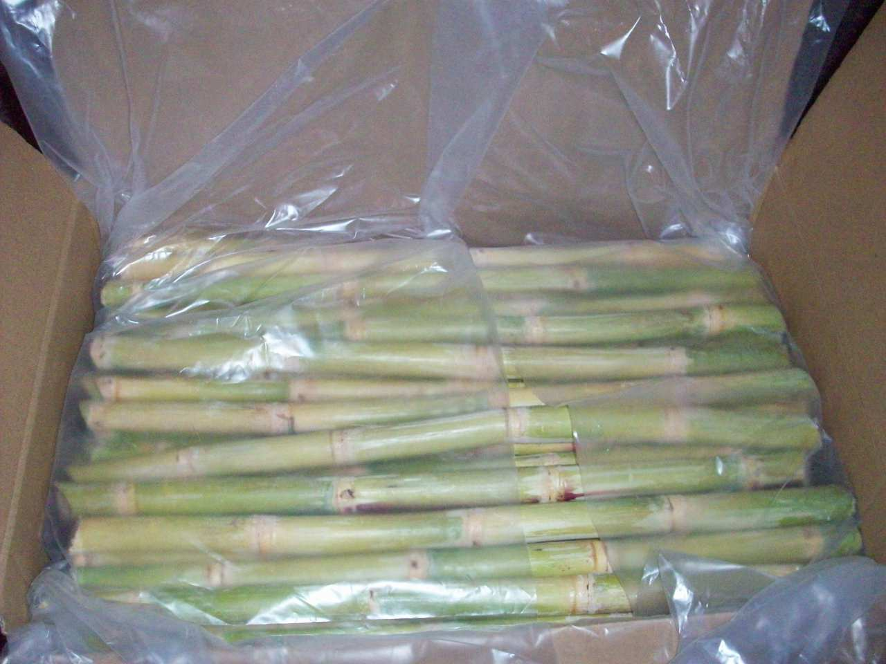 frozen_sugarcane_suppliers