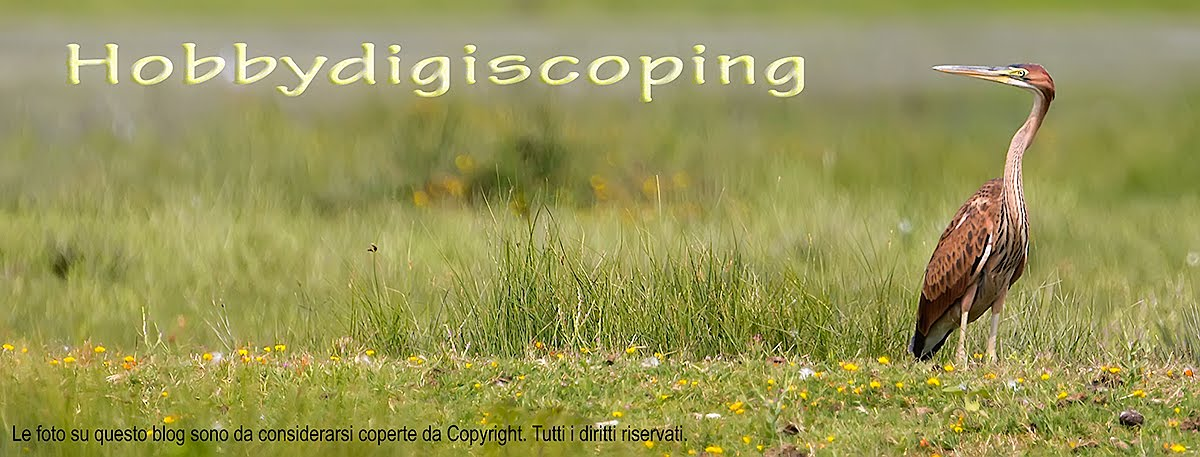 Hobbydigiscoping