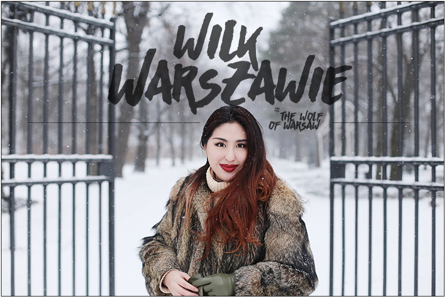 The Wolf of Warsaw - a wolf fur winter warmer