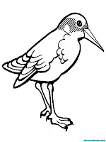 Lembar Mewarnai Gambar Burung