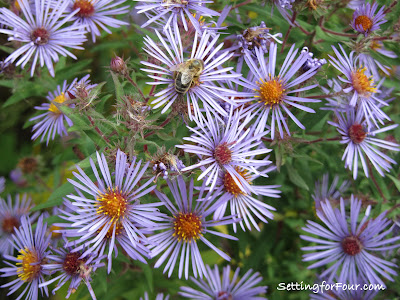 Purple Aster from Setting for Four