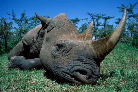 Kricpy Save Rhino