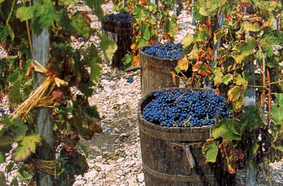 exceptional vintage for Chianti Classico 2015