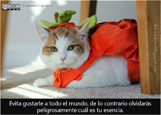 gato disfrazado de calabaza