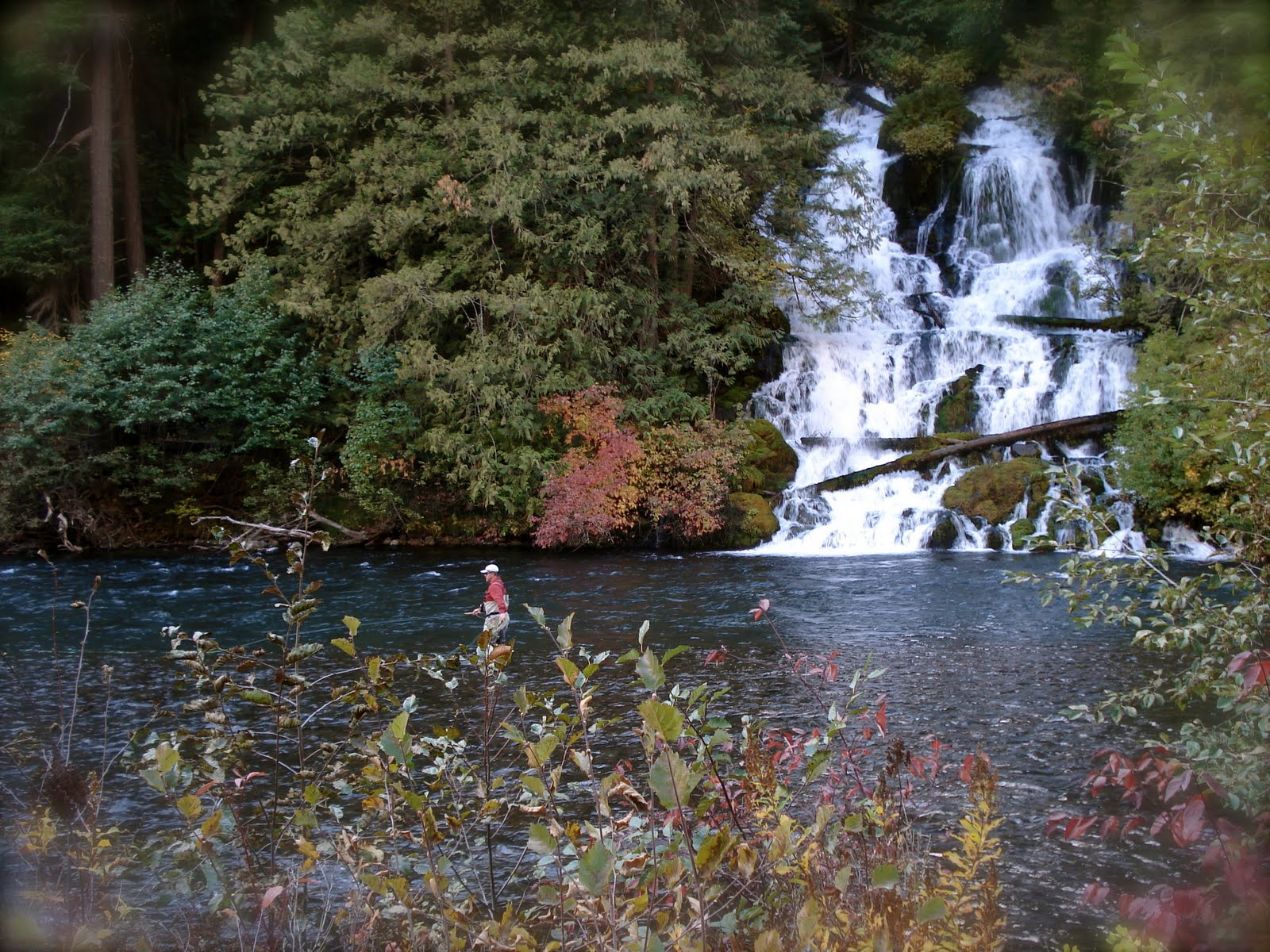 Oregon fly fishing report by larimer outfitters five for Washington river fishing reports