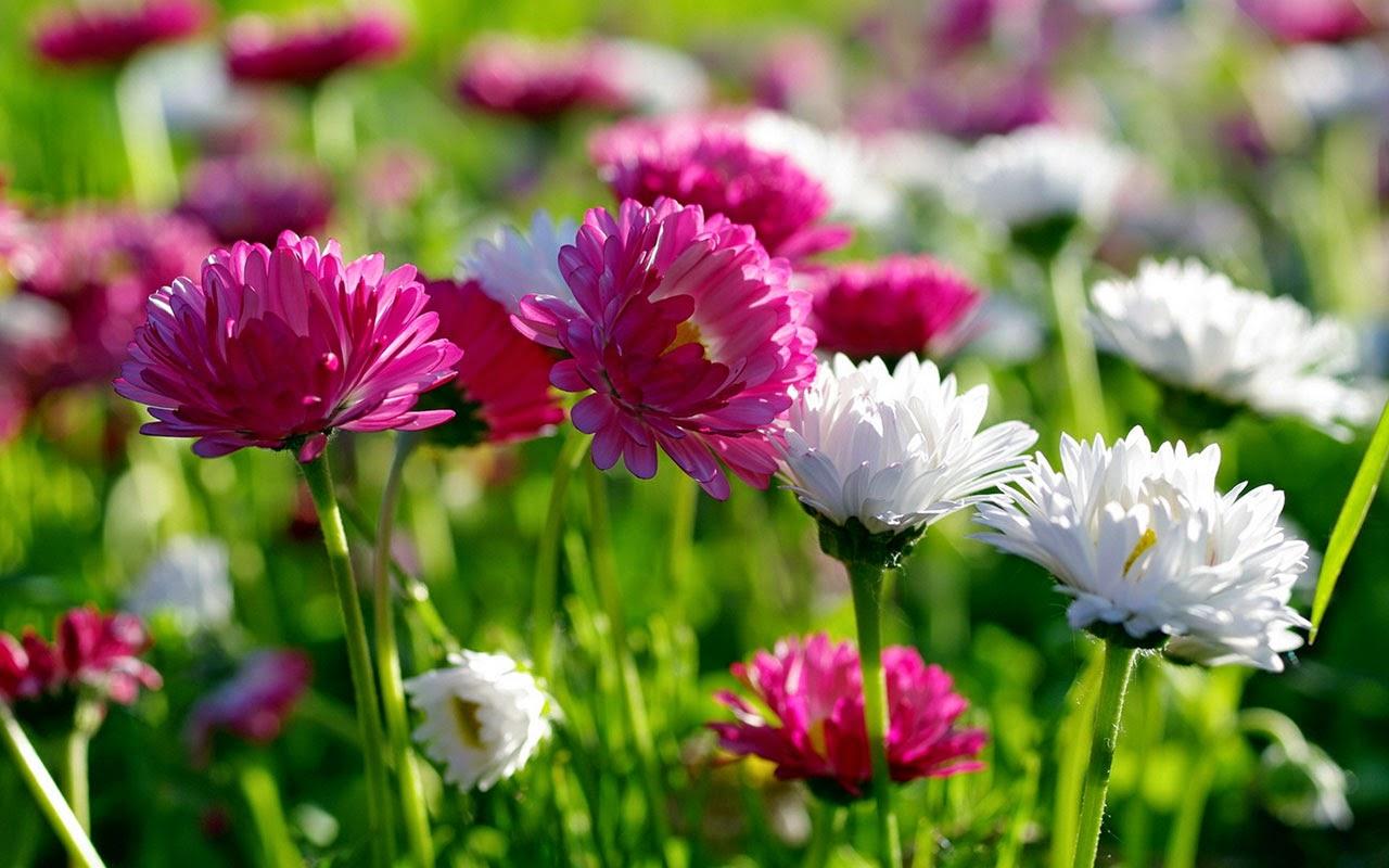 Best wallpaper beautiful flowers hd wallpapers free download beautiful flowers hd wallpapers izmirmasajfo