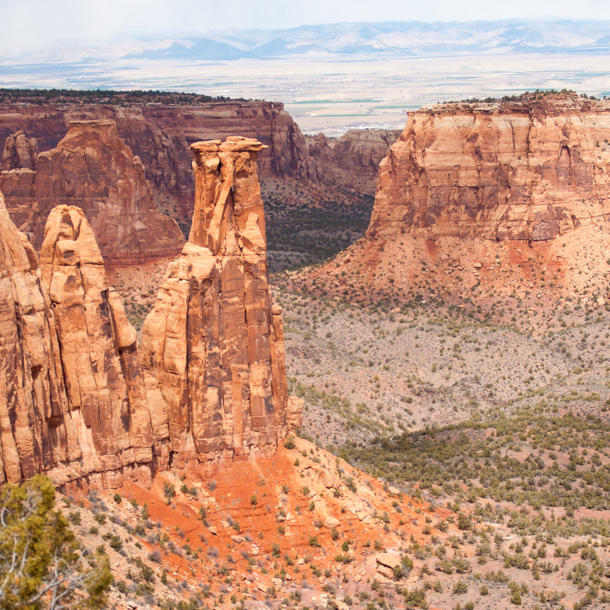 A Tree Falling: Colorado National Monument