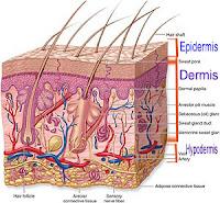 Hair scalp structure