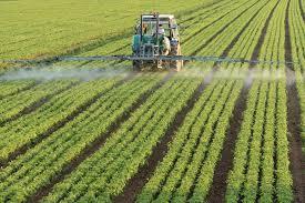 Perkembangan Teknologi Benih Vegetatif Dari Zaman Ke Zaman