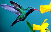 значение птиц в природе