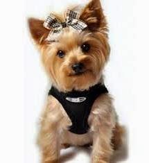 Jenis Anjing Kecil