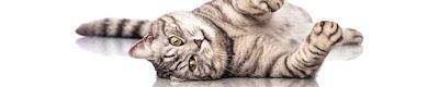 artrosi gatto anziano