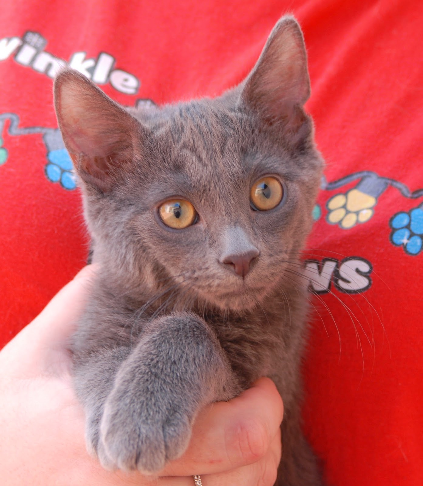 Nevada SPCA Animal Rescue Sweetheart kittens ready for adoption
