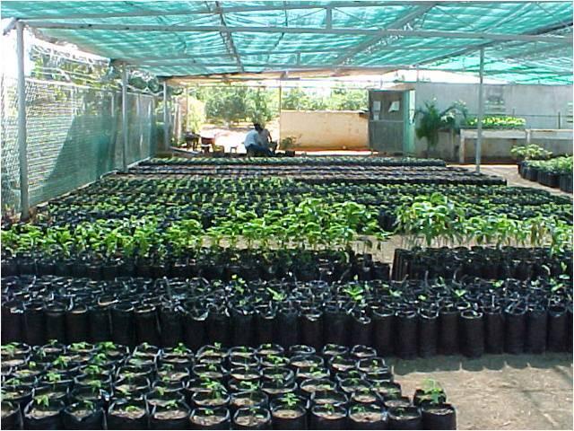 Biotecnologia for Plantas de vivero
