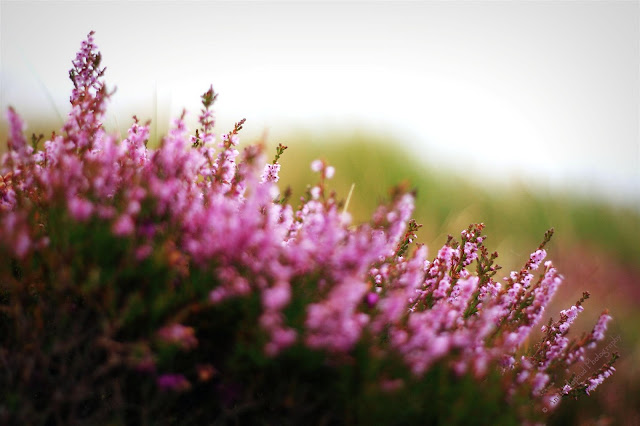 heather image