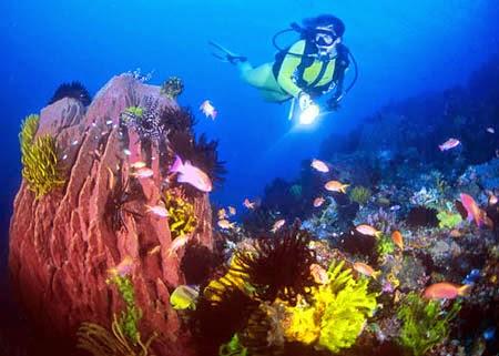 Keindahan Taman bawah laut Riung