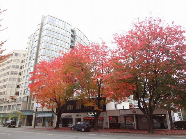 Vancouver foliage, downtown