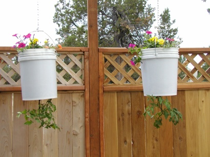 Self watering 5 gallon bucket grow tomatoes and peppers Self watering 5 gallon bucket garden