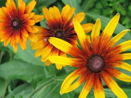 Plantas ornamentales las plantas ornamentales for Diferentes plantas ornamentales