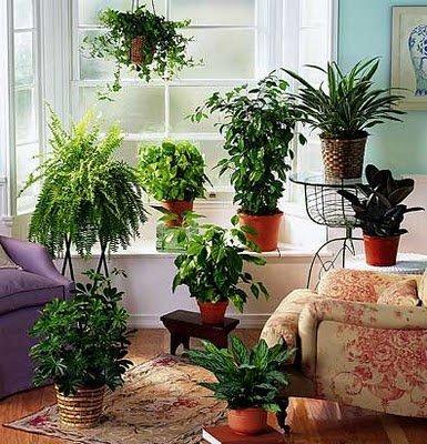 macetas y jardineras luz temperatura y humedad