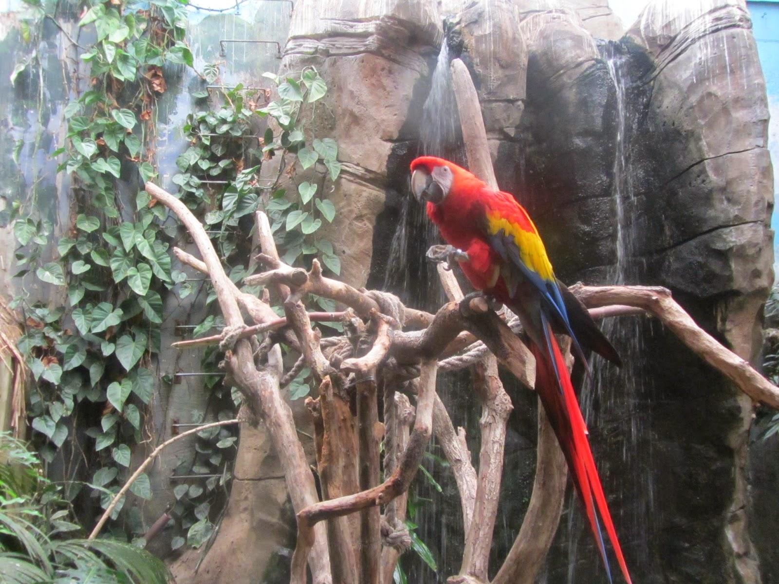 Ecosistema La Jungla, perfectamente ambientado para que las especies se encuentren en su hábitat natural.