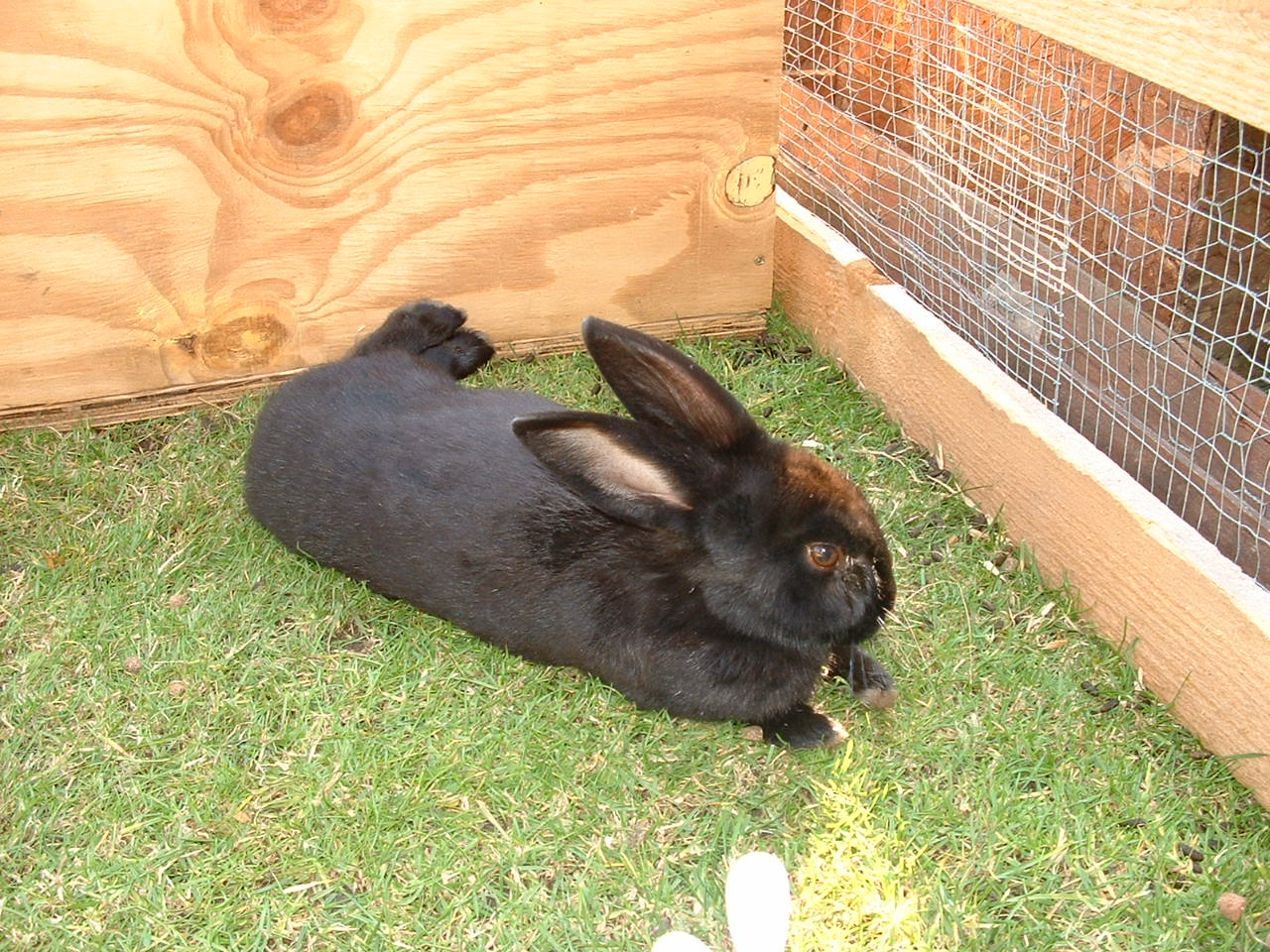Rabbit Reads: A Hutch is NOT Enough