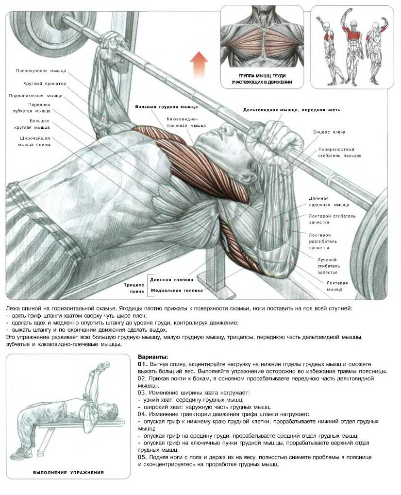 Мышцы груди упражнения 6 фотография