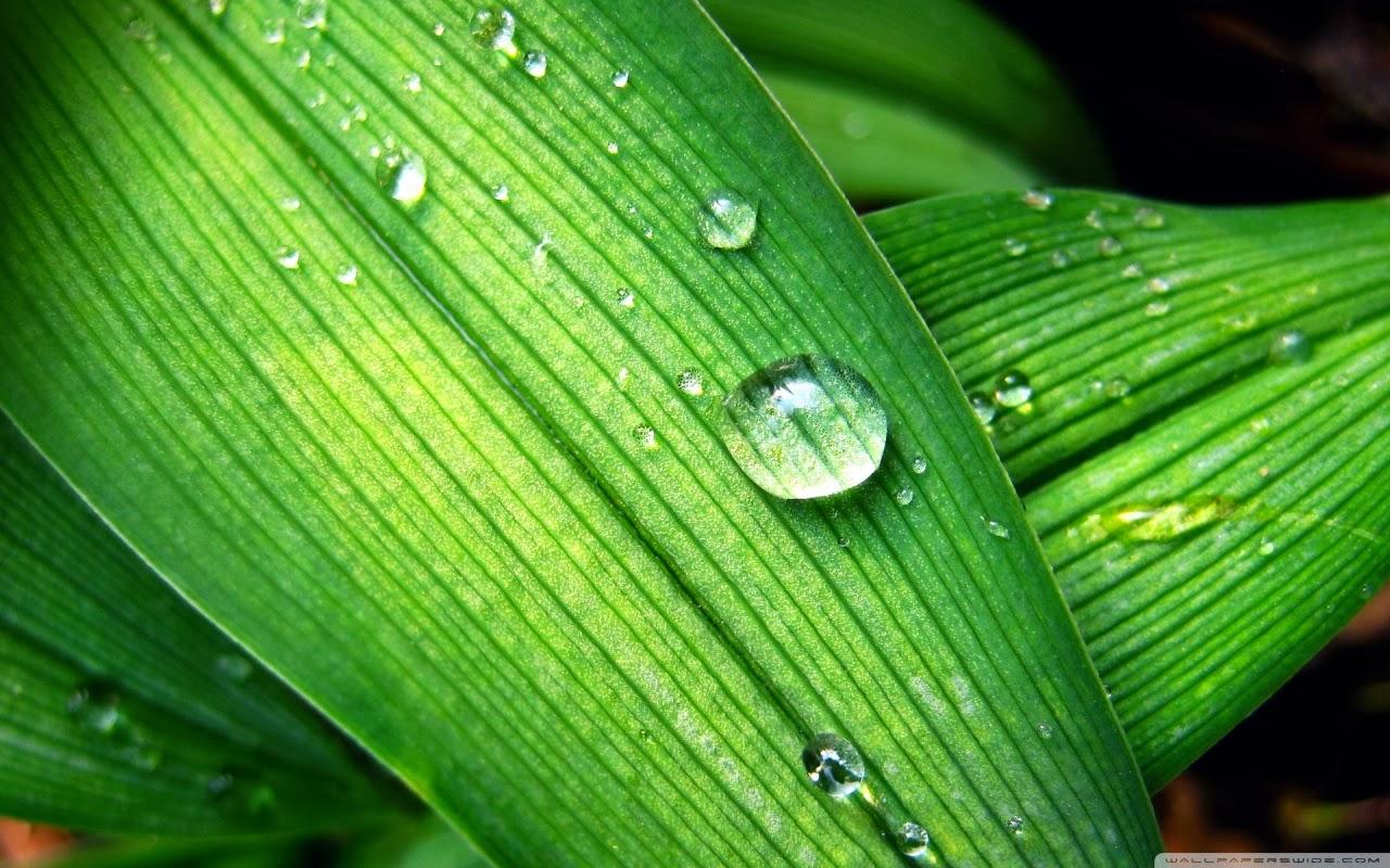 Photo gallery rain drops hd wallpapers - Rain drop wallpaper hd ...
