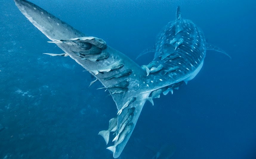 Alexander Safonov, fotografía submarina