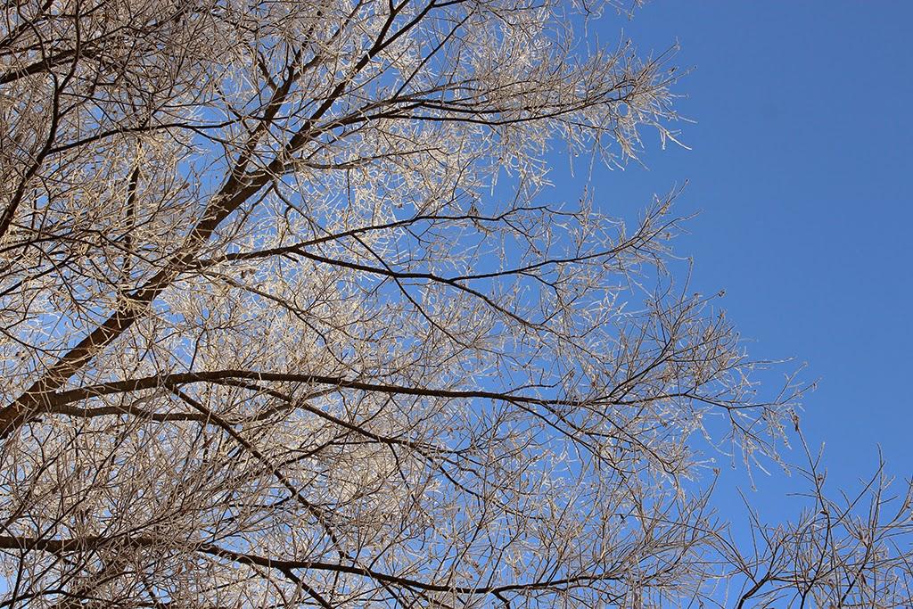 деревья в инее на фоне голубого неба, ветки деревьев