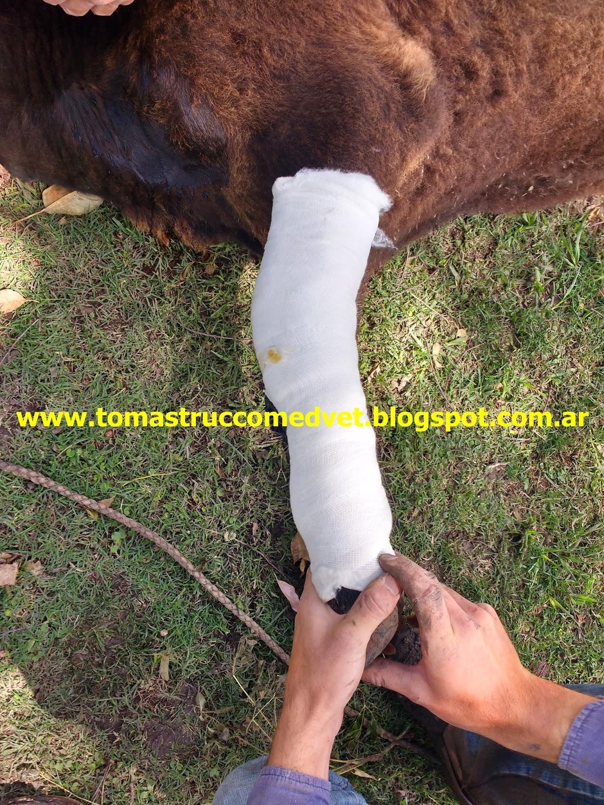 Medicina Veterinaria: Resolución de una fractura de tercer ...