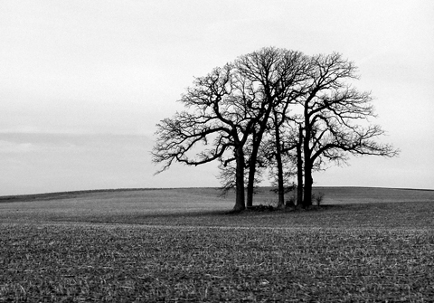 http://2.bp.blogspot.com/-y1kVAYQMWJE/TaPRveu6AuI/AAAAAAAAAEU/nnORH3ZxUno/s1600/lonely-tree-blog.jpg