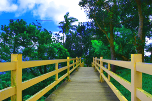 Boardwalk of Eco-Adventure Trail Picnic Grove Tagaytay
