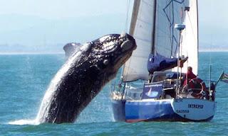 whale-Attac-hamlah