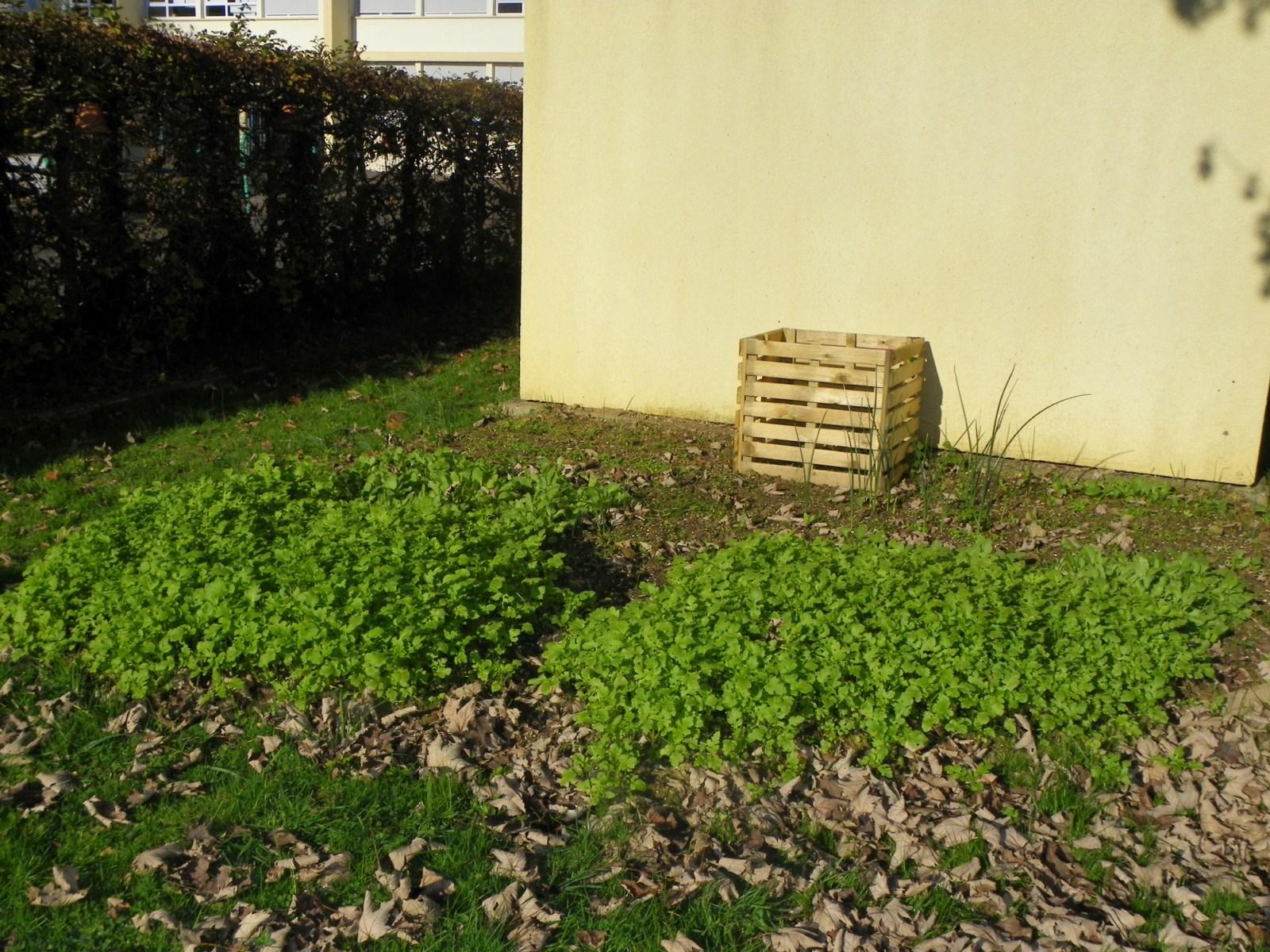 les petits donzelot o en sont nos plantations en avril. Black Bedroom Furniture Sets. Home Design Ideas