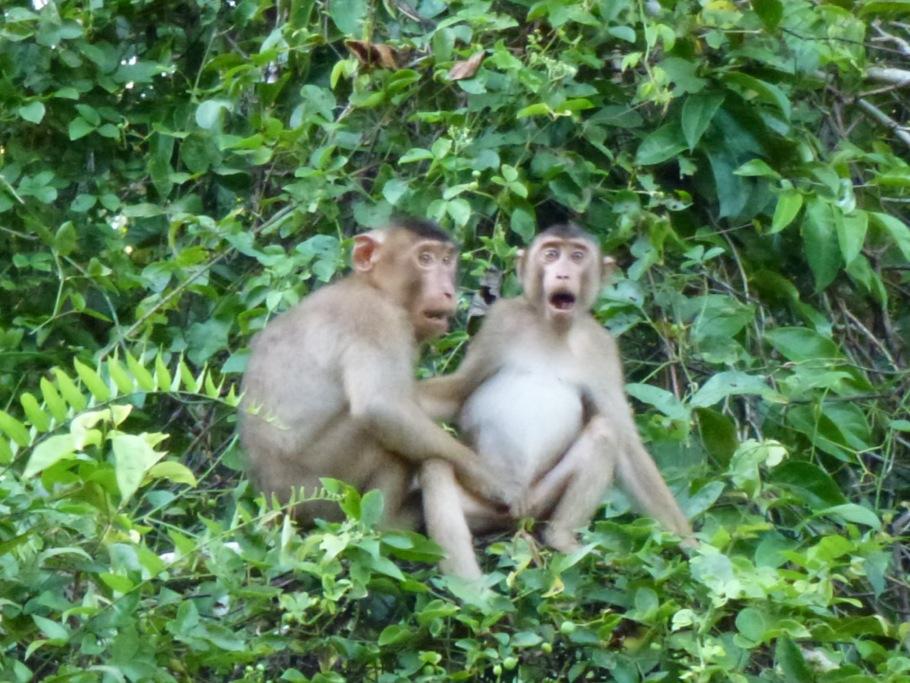 sjove billeder af aber