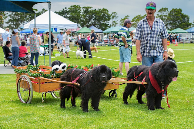 Big-Day-Out-for-Dogs-Bernese-Mountain-Dog-Club
