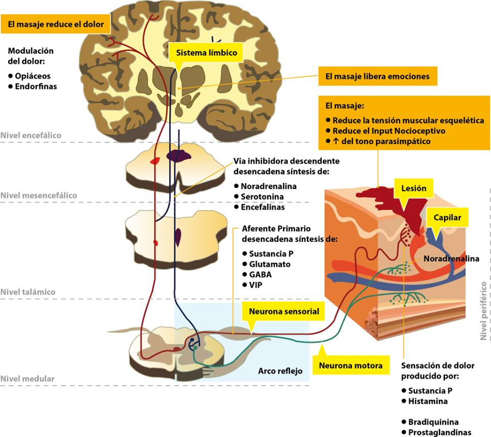 La cultura medicinal física a las curvaturas de la columna vertebral