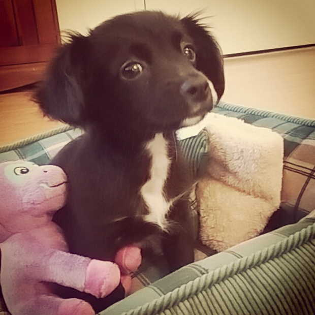 Cute dogs - part 98, cute dog photos, puppy and dog pictures, funny dog pictures