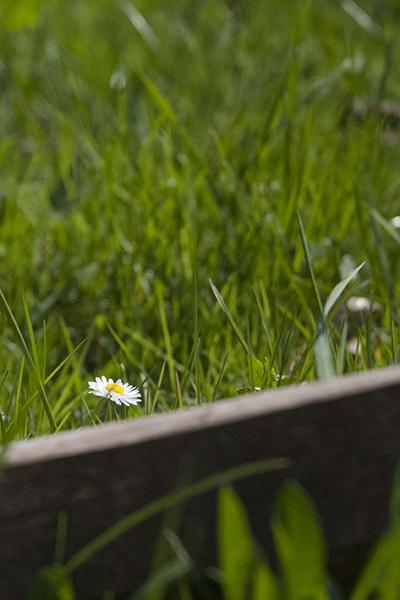 Fleur prise en macrophotographie