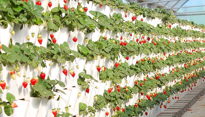 mini jardins verticais : mini jardins verticais:Publicada por Manuela Marques em 11:36