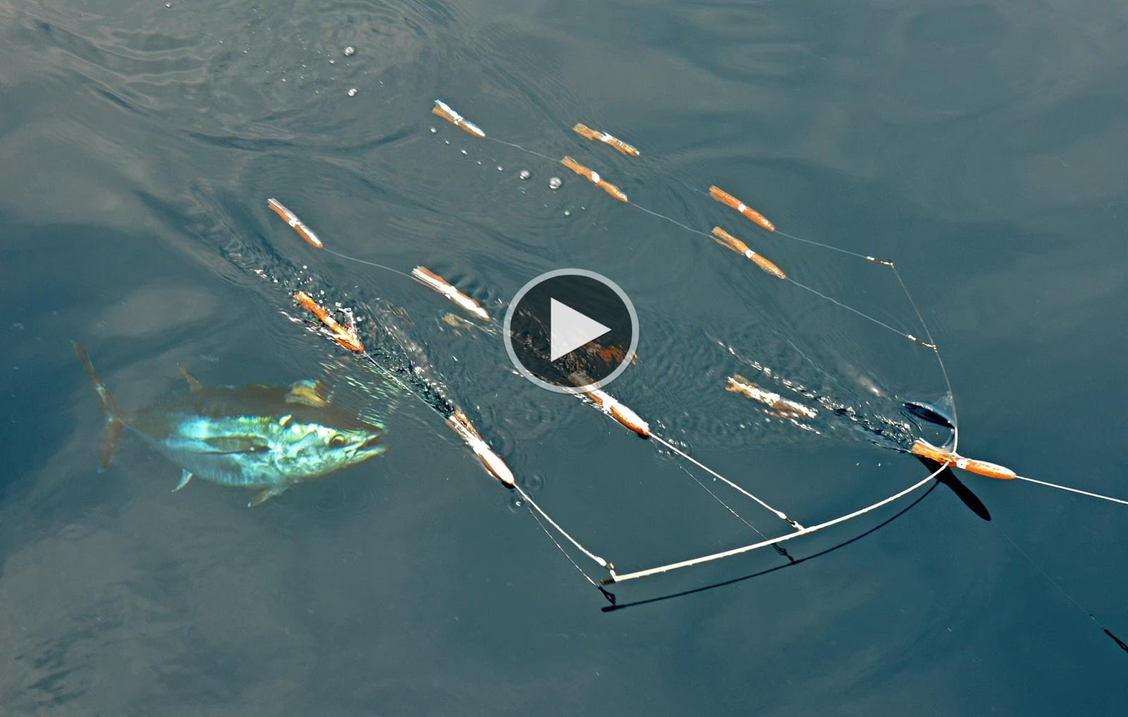 How to fish bluefin tuna fishing at the claw with si for Tuna fishing videos