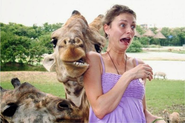 Funny animals of the week - 9 May 2014 (40 pics), cute animals, animal photos, giraffe scares a woman