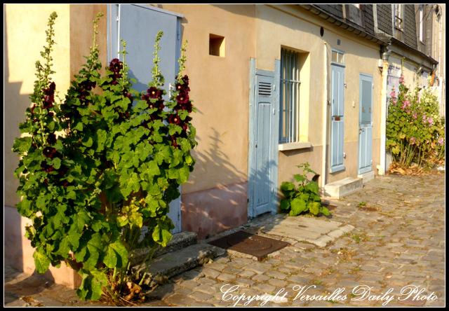 carré à la fontaine Versailles roses trémières hollyhocks