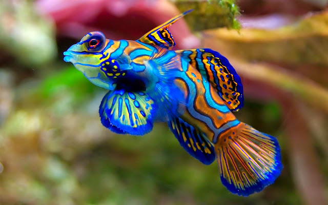 18293-Amazing Fish Animal HD Wallpaperz
