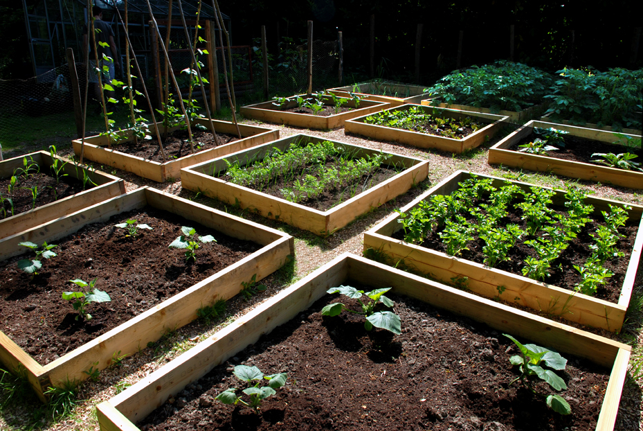 Home gardening 101 build the perfect garden 3 basic for Perfect garden layout