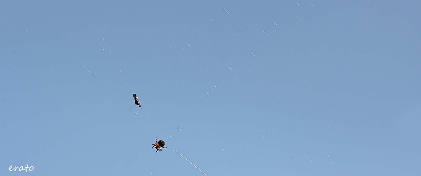 araignée ciel