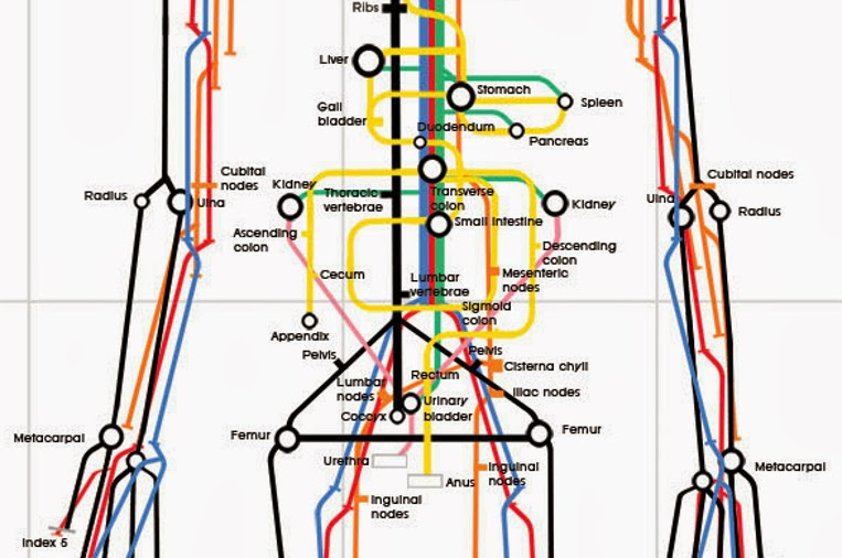 03-Sam-Loman-Illustrator-Graphic-Designer-Human-Body-System-as-Subway-Map-www-designstack-co